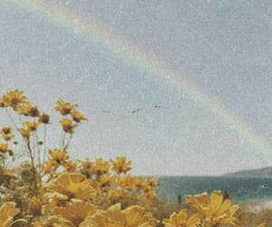 flowers, yellow, and rainbow image
