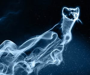 expecto patronum, harry potter, and weasel image