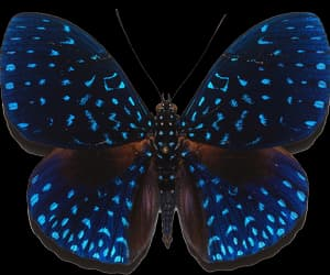 butterfly, blue, and transparent image