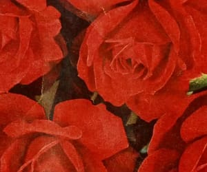 roses, vintage, and aesthetic image