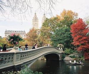 bridge, autumn, and tree image