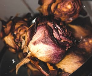 dark, roses, and dead image