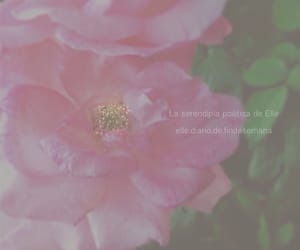 article, poesia, and rosa image