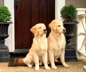 dog, house, and pet image