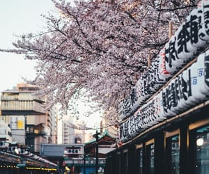cherry blossom, artists on tumblr, and japan image