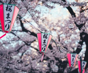 cherry blossom, japan, and landscape image