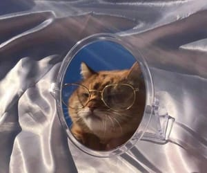 cat, aesthetic, and glasses image