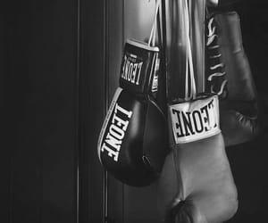 Leone, sport, and kick boxing image