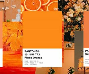 aesthetic, header, and orange image
