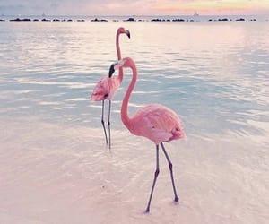 animal, beach, and pink image