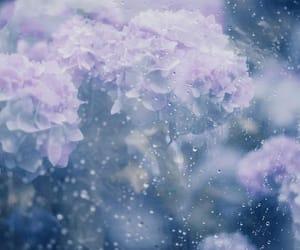 flowers, purple, and rainy image