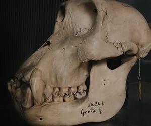 biology, darwin, and gorilla image