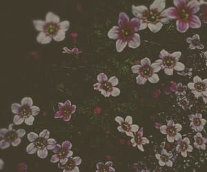 filter, flowers, and focus image