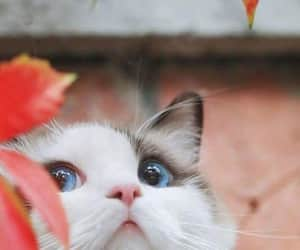 beauty, cat, and cateye image