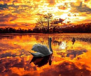 beautiful day, photo, and ducks image