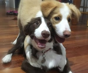 puppy, dog, and doggy image