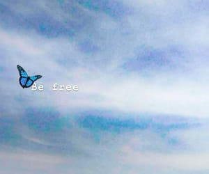 blue, butterfly, and free image