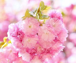 blossoms, flora, and flowers image
