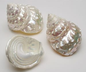 shell, pearls, and seashells image