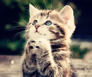 kitten, pray, and cute image