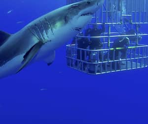 shark cage diving, bucket list app, and unique bucket list image