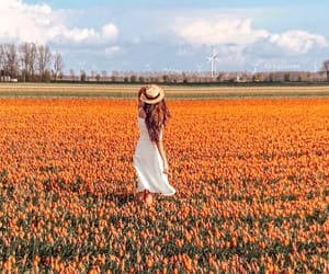 europe, flowers, and holland image