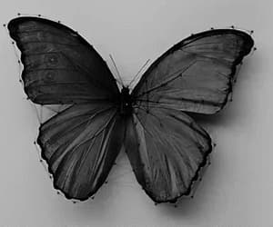 black & white, butterfly, and gif image
