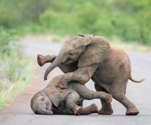 elephant and animal image