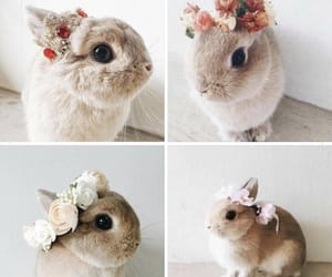 adorable, baby animal, and crown image