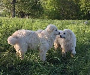 animal, dog, and doggy image