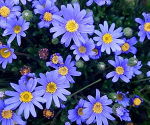 background, blue, and flower image