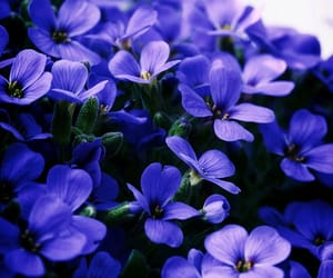 flora, flowers, and purple image