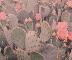 aesthetic, beauty, and cacti image