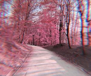 belgium, forest, and natuur image