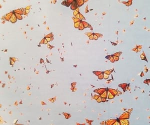 butterfly, beauty, and nature image