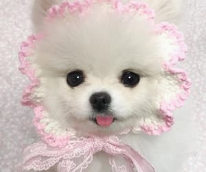 animal, puppy, and cute image