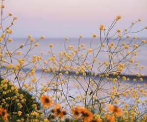 aesthetic, flowers, and miranda kerr image