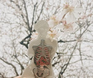 anatomy, biology, and blooming image