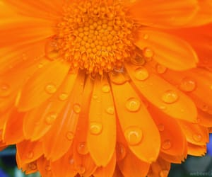 colorful, flowers, and raindrops image