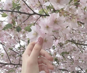 aesthetics, pure, and sakura image