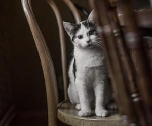 cat, feline, and pet image
