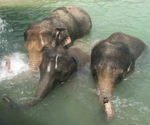 elephant and nature image