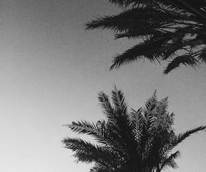 palms, beach, and black image