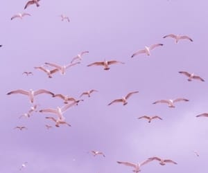 birds, purple, and sky image