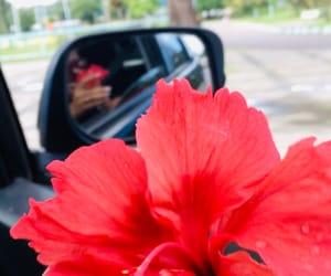 blossom, car, and flowes image