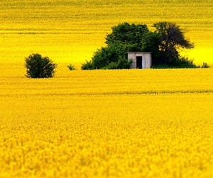 yellow and photography image