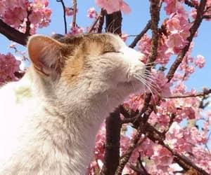 cat, nature, and sakura image