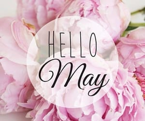 flowers, pink, and may image