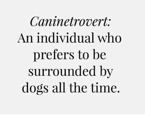 dog, dogs, and introvert image