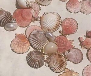 aesthetic, pink, and seashells image